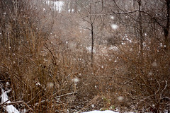 Let It Snow (Rydden213) Tags: snow canon forest brush outdoors winter trees woods upstate new york