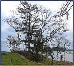 Hammond Bay South (robinb44) Tags: silhouette trees hammondbay nanaimo britishcolumbia canada neckpointpark
