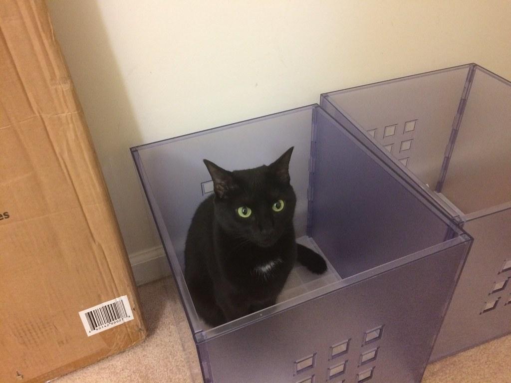 Bin Cat Brownpau Tags Martha Companionkittens Iphone5s Lekman Ikea