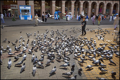 Hajj 2018: Pigeons in Medina (*monz*) Tags: hajj haj 2018 medina pigeon masjidnabawi pigeonsquae boy street monz