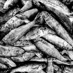 You can check out anytime you like, but you can never leave (cresting_wave) Tags: iphoneography mobileography iphonephotography mobilephotography streetphotography blackwhite monochrome iphonex fish fishmarket wildlife death