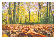 Autumn forest (Sony_Fan) Tags: autumn forest color colorful nature outdoor leaves trees thomas sony sonyfan alpha 6000 g 18105 f4 zoom wide germany umbach schwelm internationalflickrawards