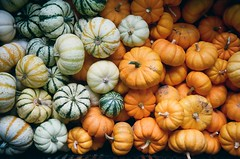 greenhouse pumpkins (acylay) Tags: 35mm 35mmfilm filmphotography analog greenhouse horticulture plants pumpkins