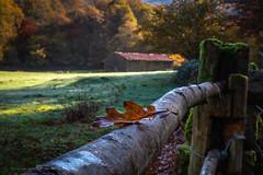 El Otoño (Juan Ig. Llana) Tags: ucieda cantabria españa es otoño paisaje hoja ocres casa borda árbol campa hierba madero valla cercado musgo equilibrio