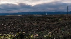 DSC_0146 (<MariuszB>) Tags: cut trees ireland sligo clouds cloudy winter nikon d5600 sigma 24 105