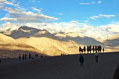 IMG_6567 (bhopi.tushar) Tags: leh ladakh mountains pangong lake diskit monastery