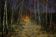 The Backlight Scanner Tutorial (palateth) Tags: lightpainting lightart night nophotoshop singleexposure urbex abandonnedplace backlight woods tutorial