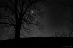 moon glow (Rourkeor) Tags: 35mmzeisssonnartlens 35mm rx1r sony uk blackwhite branches carlzeiss fullframe lightandshadows moon reflections shadows silhouette stars trees winter