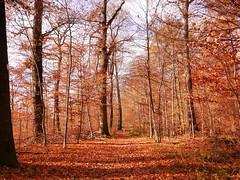 P1060886 (mireiatarres) Tags: arboles autumn herbst trees forest bosque