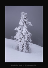 Hornisgrinde (MC--80) Tags: hornisgrinde schwarzwald black forest winter