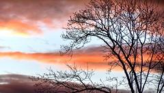 Sunset Sky 2/4/19 (esywlkr) Tags: sky clouds sunset tree silhouette nature nc haywoodcounty northcarolina