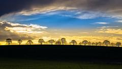 Plaine picarde [Explore] (Alexandre LAVIGNE) Tags: hdpentaxdfa150450mm pentaxk1 plaine ambiance arbres bleu ciel crête k1 lumière nature nuages paysage pluie lehaucourt picardiehautsdefrance