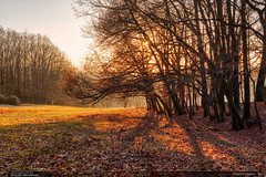 Divočina pastvin (jirka.zapalka) Tags: trees forest kudlovskavrchovina zlinregion autumn morava czechrepublic nature