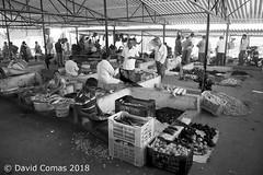 Kanyakumari - Fish Market (CATDvd) Tags: nikond7500 bhāratgaṇarājya india índia kanyakumari கன்னியாகுமரி tamilnadu tamiḻnāṭu தமிழ்நாடு republicofindia repúblicadelíndia repúblicadelaindia भारतगणराज्य september2018 catdvd davidcomas httpwwwdavidcomasnet httpwwwflickrcomphotoscatdvd market mercado mercat fishmarket mercatdelpeix mercadodepescado