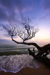 Anini (Eddie 11uisma) Tags: kauai hawaii sunset beach