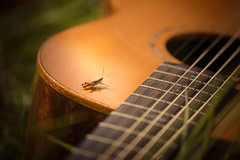 Guitar Break (Lindsey1611) Tags: summer guitar countryside cricket grasshopper insect september afternoon sunshine warm grass thisreallyisbrilliantandnottaggedbylindsey