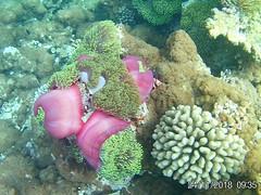 Maldives (Andy Latt) Tags: 20181124093536 andylatt maldives moofushi coral sea ocean indianocean snorkel dive