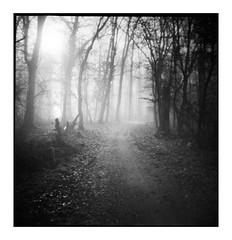 (bakmak71) Tags: dianamini unterwegsmitjanni janni nebel fog anfangdezember agfaapx100 toycamera analog swfilm