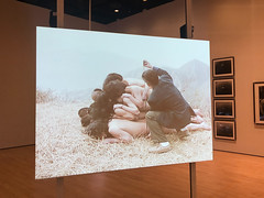 To Add One Meter to an Anonymous Mountain (2) (Paul Keller) Tags: art china museum sanfrancisco sfmoma travel video