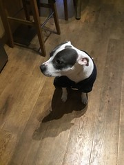 She doesn't like the cold, so we got her a coat. (sandiagadeni) Tags: dog puppy cute puppies