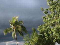 Hawai'i Colours - Dark Clouds (Pushapoze (NMP)) Tags: hawaiii oahu pearlharbor palm palmier sky ciel orage storm clouds nuages