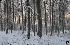 Naked forest (Ivica Pavičić) Tags: forest medvednica mountain mountaineering hiking landscape cold snow trees winter croatia