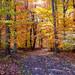 autumn morning light dm