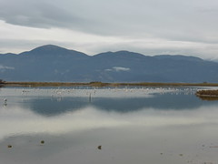 Αλυκή Αίγιο!!   P1060658 (amalia_mar) Tags: αλυκήαιγίου αχαια ελλάδα θάλασσα υδροβιότοποσ πουλιά βουνά ουρανόσ σύννεφα αντανακλάσεισ νερό alyki aigioachaiagreece sea birds mountains sky clouds reflections water amaliamarinopoulou sundaylights βιότοποσ πανίδα χλωρίδα wetland biotope fauna flora
