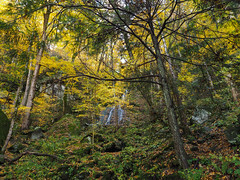 Fern Branch Falls, Great Smoky Mountains National Park, Tennessee (netbros) Tags: greatsmokymountainsnationalpark tennessee fernbranchfalls greenbrier porterscreektrail fallcolor netbros internetbrothers