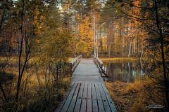 Walk in to the autumn (Joni Salama) Tags: lampi luonto korpinkierros silta syksy vesi espoo suomi nuuksio uusimaa finland fi bond nature bridge autumn fall landscape