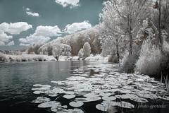 Bavaria - Infrared Idyll (gporada) Tags: infrared idyll altmühlriver bavaria germany 720mm landscape diy diyconversion waterlilies nikon nikond40