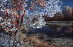 Цыганка-осень. DSC00071-gn (Gobova Natalia) Tags: ir infrared 630nm