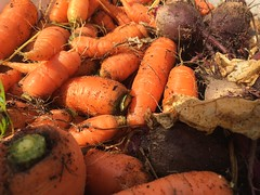 Carrots (prima-sort_photos) Tags: carrot food vegetable fresh carrots organic healthy orange agriculture market vegetables potato raw diet green bunch garden nature root nutrition natural gardening vegetarian ingredient farm beetroots crop harvest croppingfield harvestfield vegetarianfood vegan organicfood autumn fall