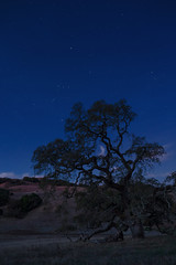 Orion and Taurus in the Early Morning Sky in November (fksr) Tags: mountburdell marincounty california landscape oak tree sky stars night dawn constellations orion taurus