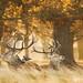 Red Deer V