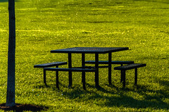 Indianapolis Picnic Table on Grass (Bracus Triticum) Tags: indianapolis picnic table grass インディアナポリス indiana インディアナ州 unitedstates usa アメリカ合衆国 アメリカ 8月 八月 葉月 hachigatsu hazuki leafmonth 2018 平成30年 summer august