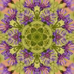 Kaleido Abstract 1893 (Lostash) Tags: art abstract edited nature patterns symmetry kaleidoscopes