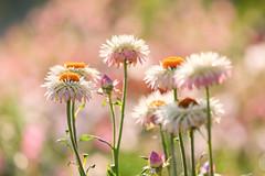 Flowers (mclcbooks) Tags: flower flowers floral denverbotanicgardens colorado