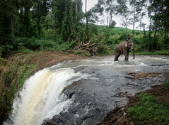 Working Elephant (jbrad1134) Tags: river elephant work green jungle cambodia banlung water waterfall tropics asia southeastasia animals nature wildlife candid