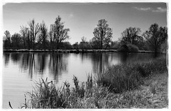 Reflections in the River Great Ouse at Ely. (fenman_1950) Tags: ely rivergreatouse monochrome cambridgeshire sonya77
