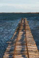 Ponton sur l'étang de Thau (Michel Seguret Thanks for 14.8 M views !!!) Tags: france occitanie languedoc herault marseillan pond tarbouriech ponton ostreiculture michelseguret nikon d800 pro etang thau