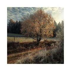 Kristallweg (linke64) Tags: thüringen deutschland germany natur landschaft rahmen himmel wolken wald winter weg weis waldweg winterwald wolkenhimmel bäume baum reif