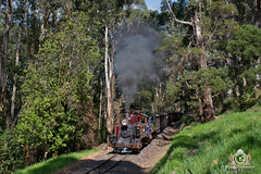 Summer on the Narra (R Class Productions) Tags: steam train puffing billy railway victorian railways na baldwin locomotive narrow gauge forest heritage vintage dandenongs 12a 6a