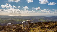 Looking South (JKmedia) Tags: dartmoor pony white horse south devon boultonphotography 2018 clouds sky landscape sea coat 2 hills elevated wild nature aonb ugborough beacon fields 5diii farmland canon wideangle