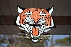 Extinct Balmain Tiger (l plater) Tags: torasumi artink balmain sydney