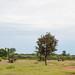 Senegal-7243.jpg