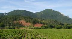 Vineyards, Les Pontils (Niall Corbet) Tags: france occitanie languedoc roussillon aude pebrieres vineyard vignoble lespontils