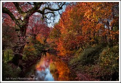 Autumn leaves and the stream flows (awardphotography73) Tags: 2018 sigma phototherapy nikon forestfarm orange red seasons wildlife naturereserve nature southwales cardiff stream autumnal autumn autumncolours leaves