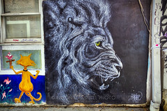 White Lion, 2018.11.06 (Aaron Glenn Campbell) Tags: shaneberg whitelion mural wallart creatives creativity art brick building architecture alley oldcityjava oldcity downtown knoxville tennessee tn outdoors 3xp hdr ±3ev gritty textures macphun skylum aurorahdr nikcollection colorefexpro viveza sony a6000 ilce6000 mirrorless rokinon 12mmf2ncscs wideangle primelens manualfocus emount