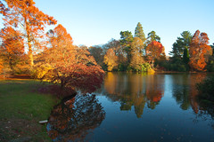Autumn @ Sheffield Park (Adam Swaine) Tags: sheffieldpark naturelovers nationaltrust sussex sussexgardens autumn autumncolours autumnviews beautiful uk ukcounties counties canon lakes rural britain british trees colours